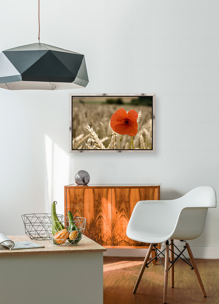 Red Flower In Field with Floating Frame