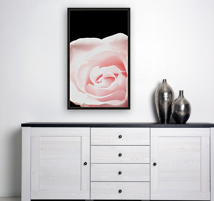 Pink Rose, Close-Up  Art
