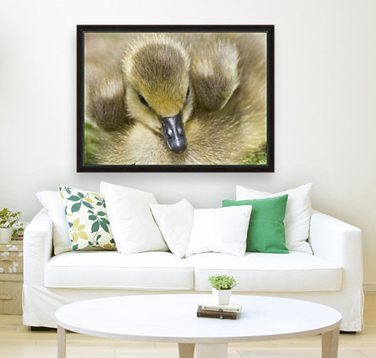 Fuzzy Gosling  Art