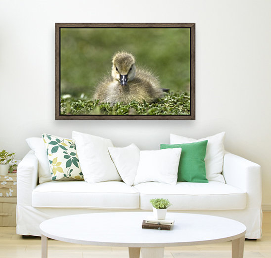 Fuzzy Gosling with Floating Frame