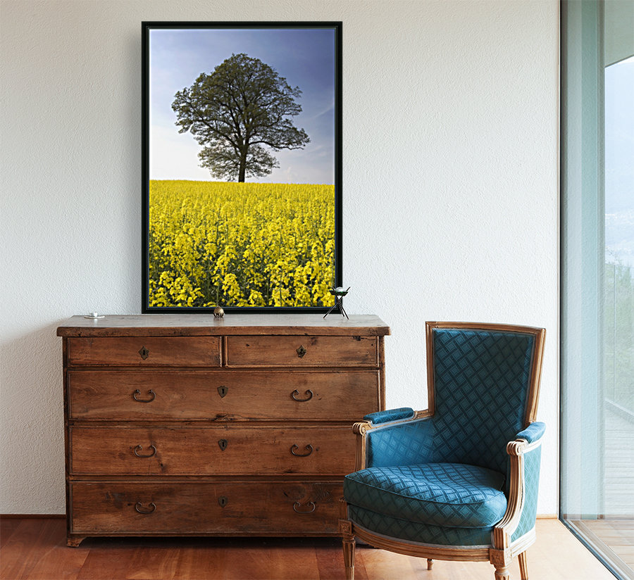 Tree In A Rapeseed Field, Yorkshire, England  Art