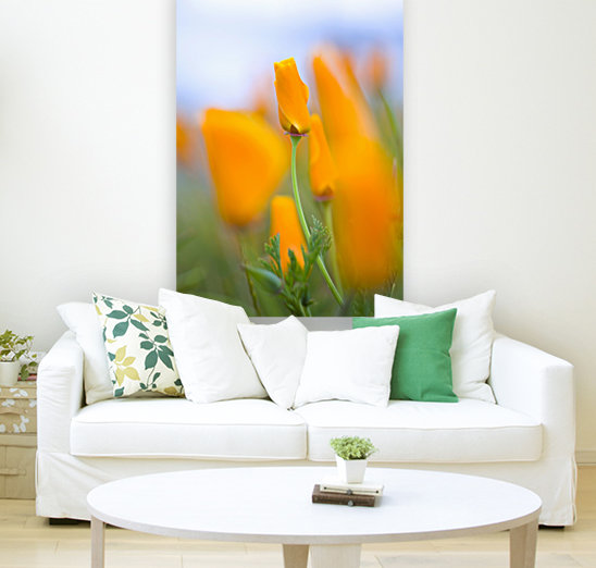 Furled Poppy with Floating Frame