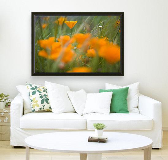 Close Up Of Orange Poppy Flowers  Art