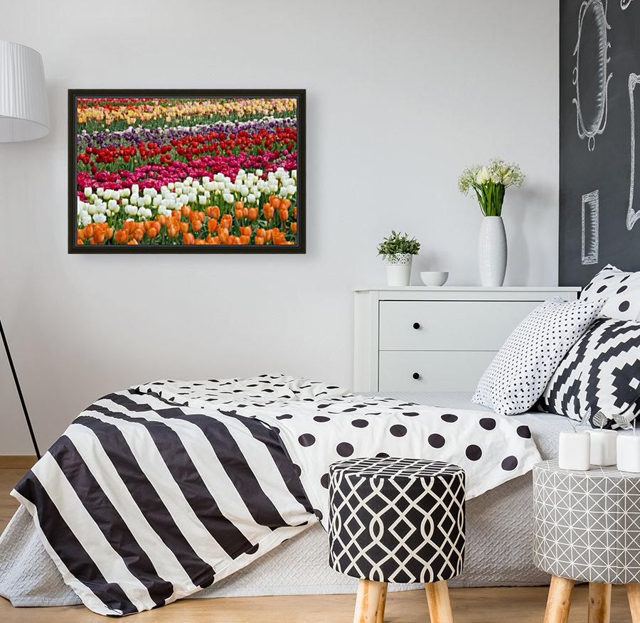 A Tulip Field  Art
