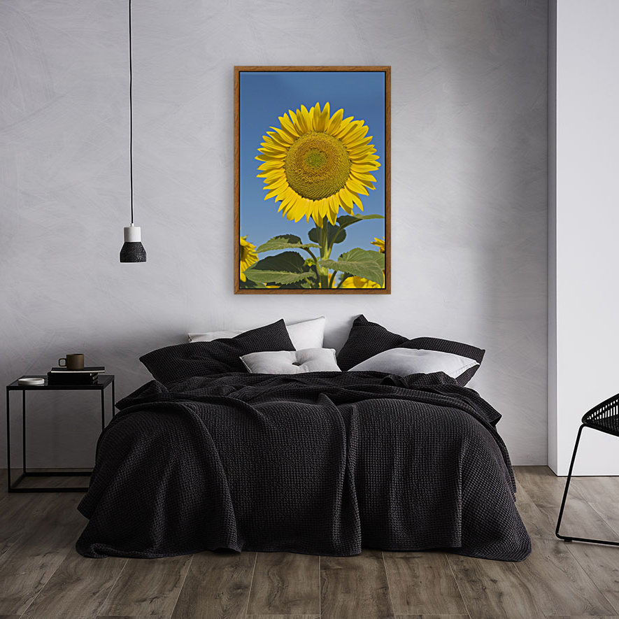 Sunflower (Helianthus Annuus)  Art