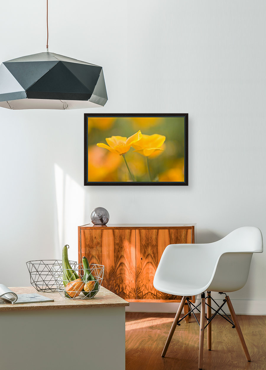Yellow Poppy Flower, Mount Hood, Oregon, Usa  Art
