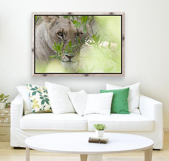 Lioness, Kenya, Africa  Art