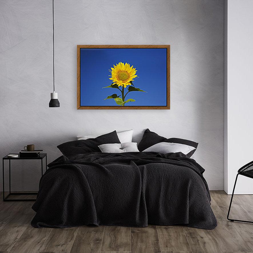 Laval, Quebec, Canada; Sunflower (Helianthus Annuus) Against A Blue Sky  Art