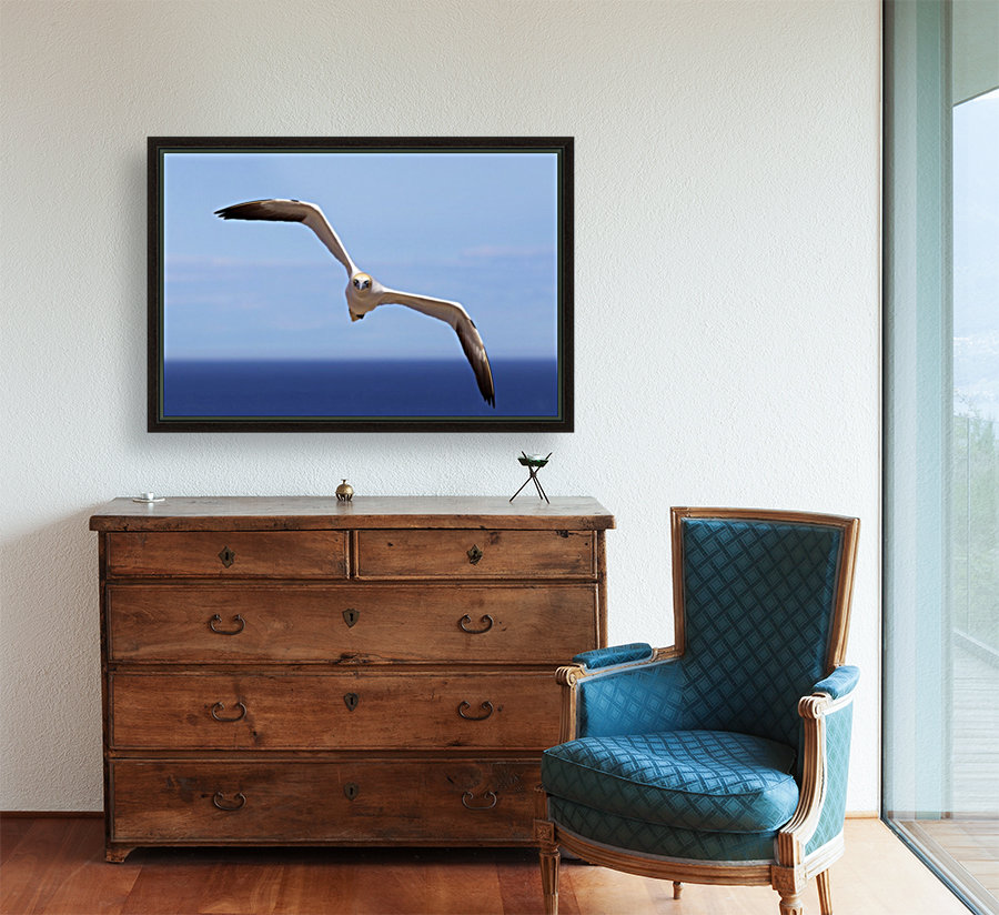 Gannet Flying Over The Water; Perce, Quebec, Canada  Art