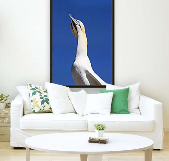 A Single Gannet Searches The Sky For Her Mate On Bonaventure Island; Perce, Quebec, Canada  Art