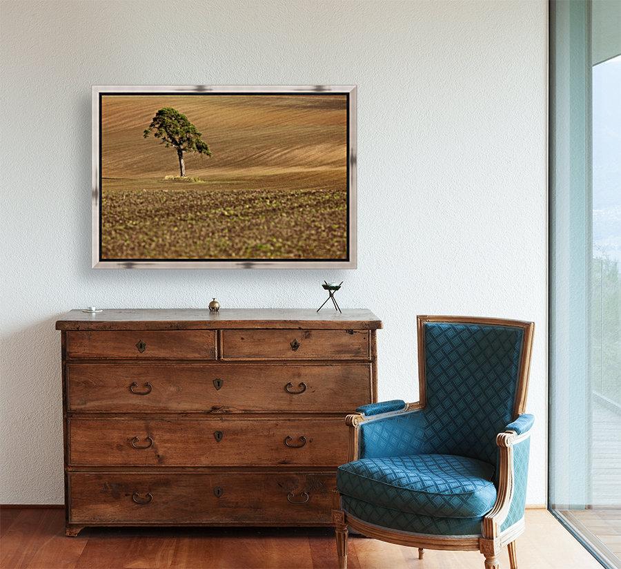 A Single Tree In A Field; Scottish Borders, Scotland - PacificStock ...