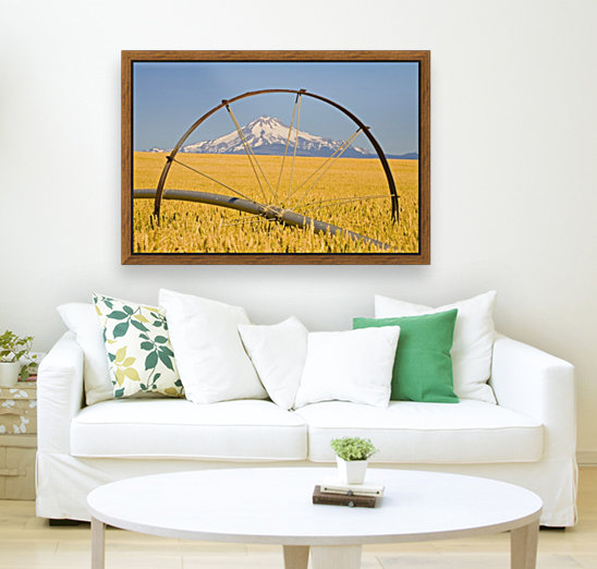 Irrigation Pipe In Wheat Field With Mount Hood In Background; Oregon, Usa  Art