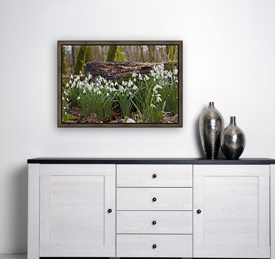 White Flowers Growing On A Forest Floor Beside A Fallen Tree; Dumfries, Scotland  Art