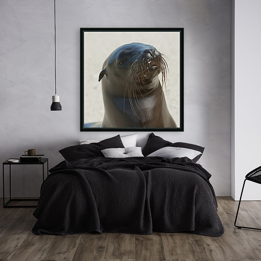 Sea Lion; Galapagos, Equador with Floating Frame