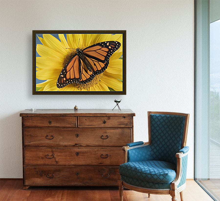 Monarch Butterfly On Sunflower.  Art