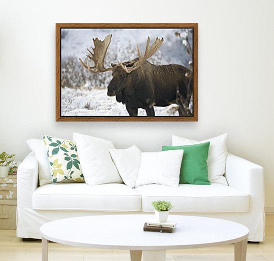 Bull moose (alces alces) in the chugach mountains;Alaska, united ...