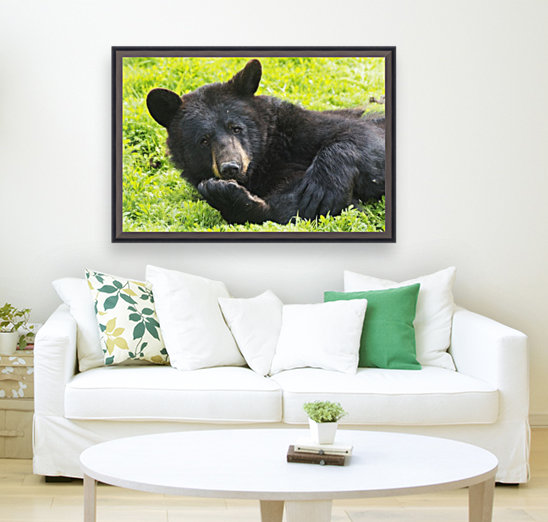 A black bear rolls around in the lush green grass  Art