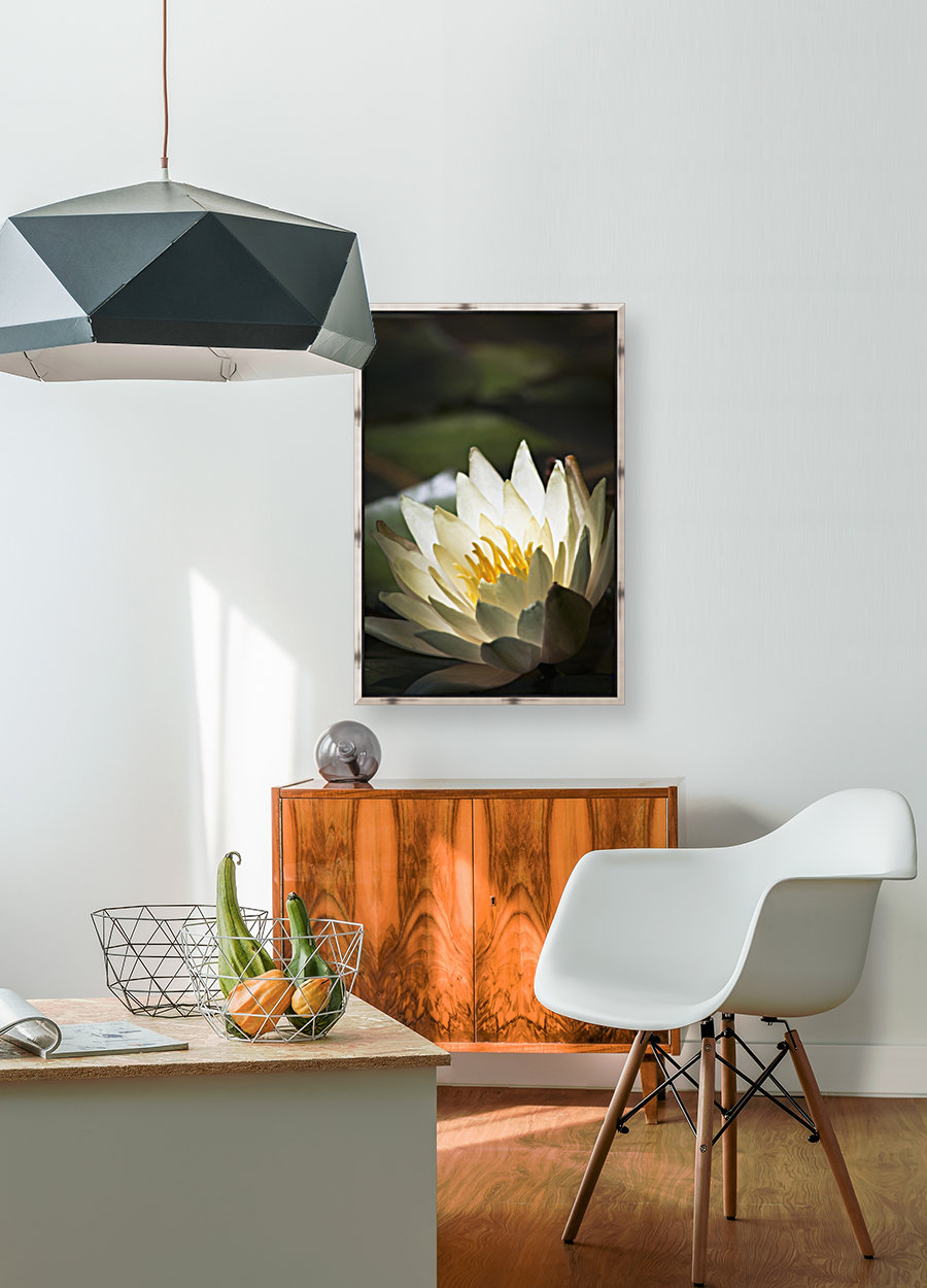 Water lily blooms in a pond; Astoria, Oregon, United States of America  Art