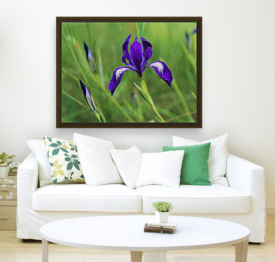 Oregon Iris (Iris tenax) blooms in the forest; Florence, Oregon, United States of America  Art