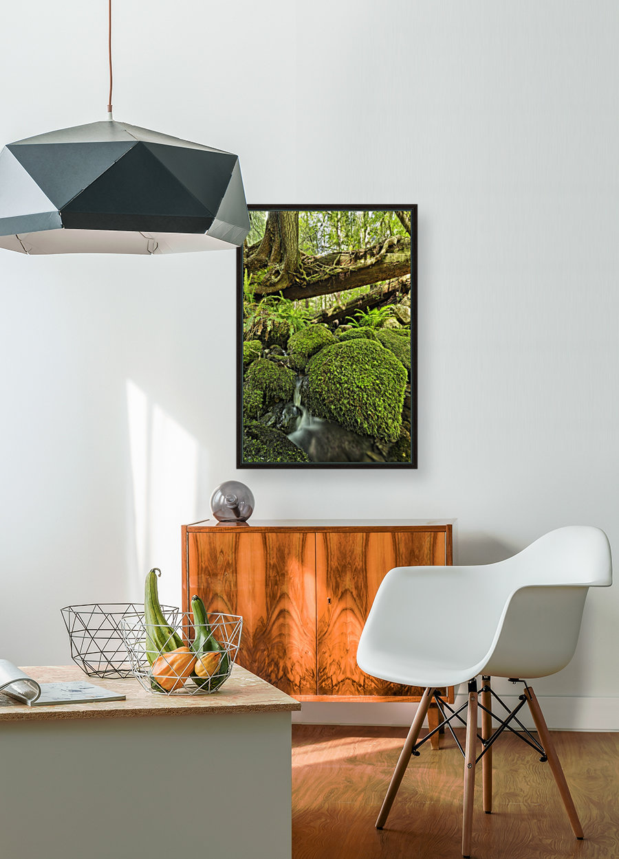 Rainforest in Avatar Grove near Tofino; British Columbia, Canada with Floating Frame