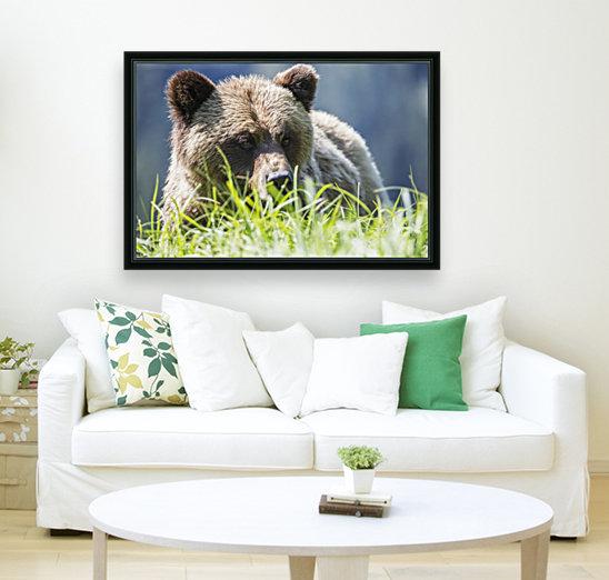 Grizzly Bear (Ursus Arctos Horribilis), Khutzymateen Sanctuary, near Prince Rupert; British Columbia, Canada  Art