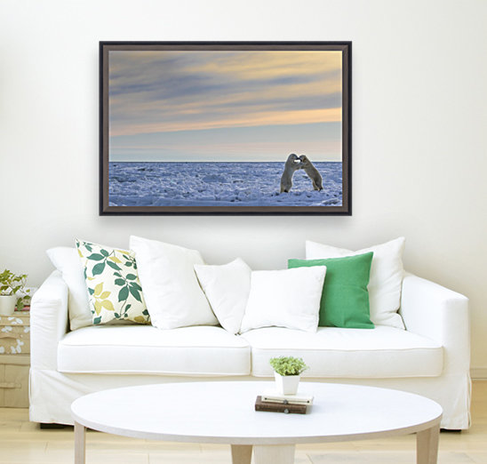 Polar bears (ursus maritimus) sparring on the coast of Hudson Bay; Manitoba, Canada  Art