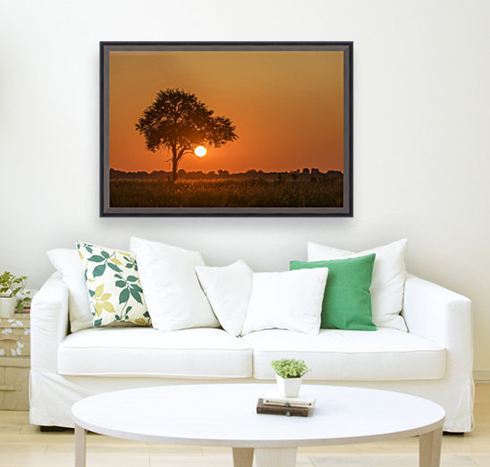 Backlit grass and silhouetted tree at sunset; Botswana  Art
