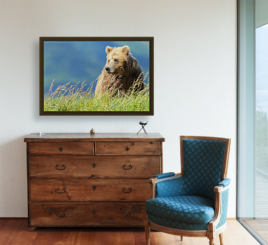 Portrait of a brown bear (portrait), Katmai National Park; Alaska, United States of America  Art