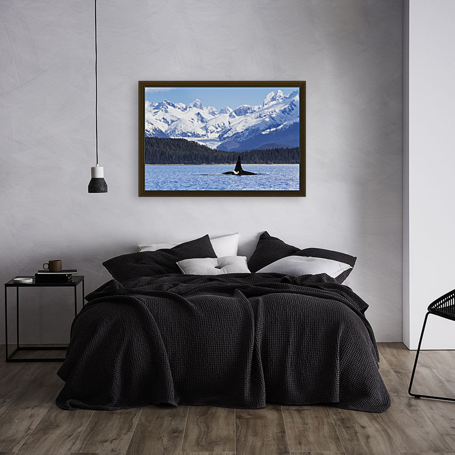 An Orca Whale (Killer Whale) (Orcinus orca), male as indicated by the height of it's dorsal fin, surfaces in Lynn Canal, Herbert Glacier, Inside Passage; Alaska, United States of America  Art