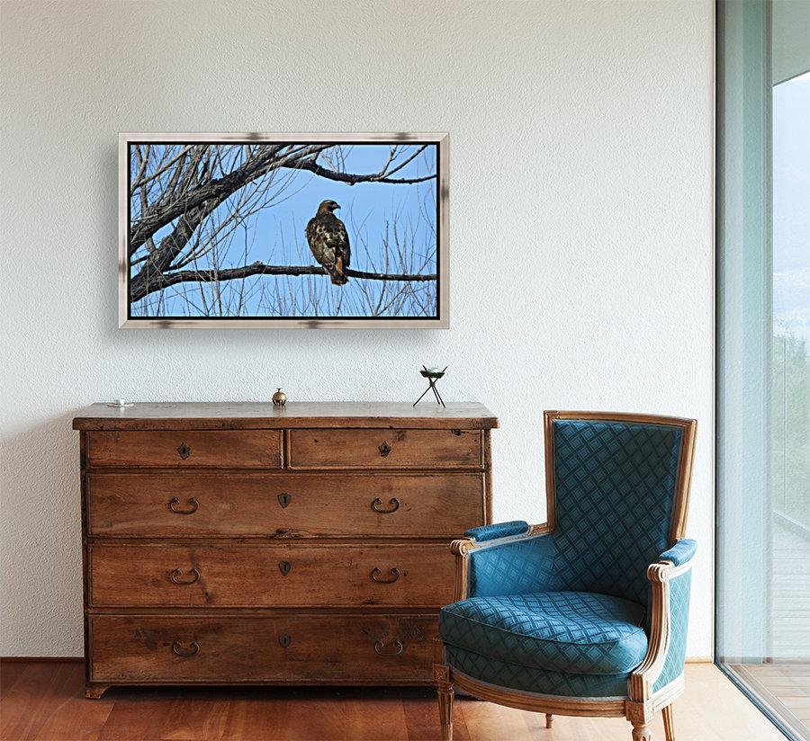 Golden Eagle VP4  Art