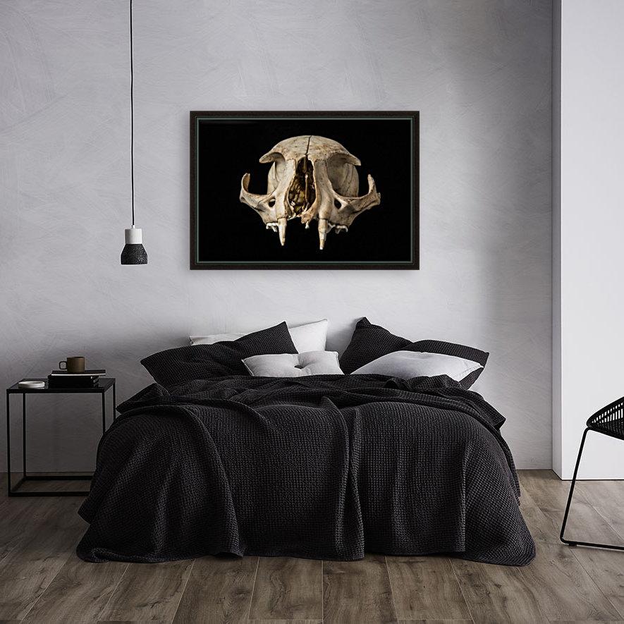 Bobcat Skull  Art