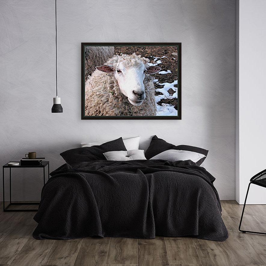 Lamb in the Winter VP1  Art