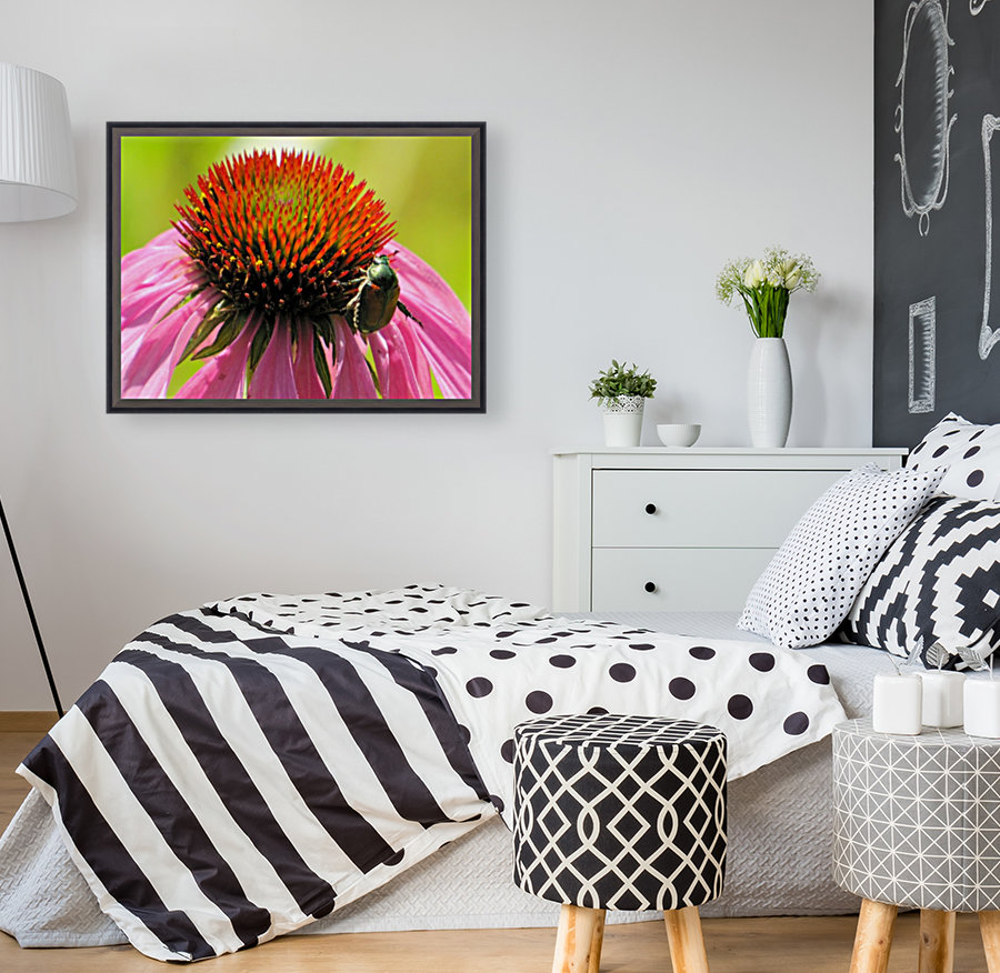 Echinacea and the Bee in Lincoln Park VP6  Art