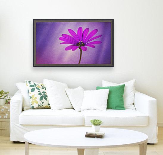Purple Osteospermum  Art