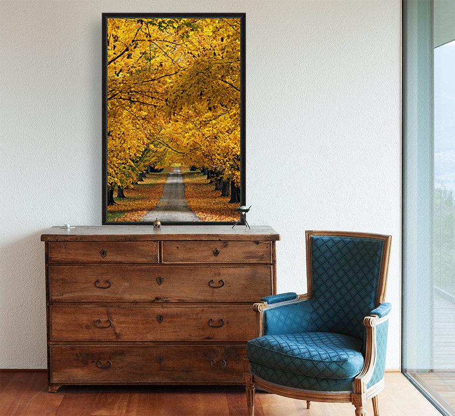 Trees In Autumn with Floating Frame