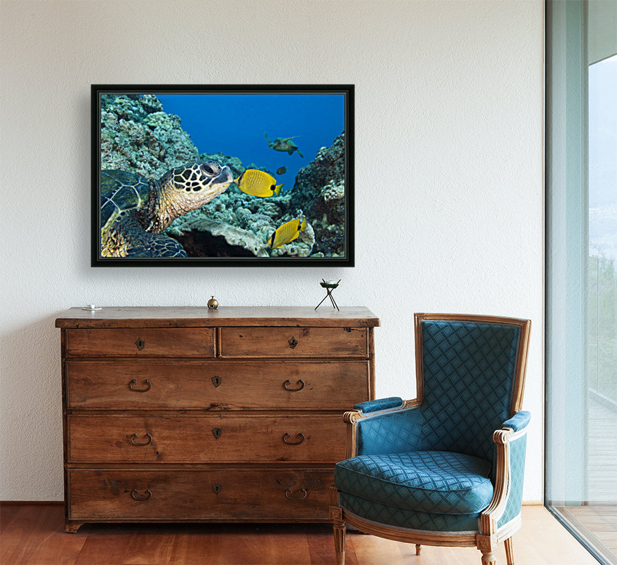 USA, Green Sea Turtle (Chelonia Mydas) Endangered Species And Butterfly Fish; Hawaii Islands  Art