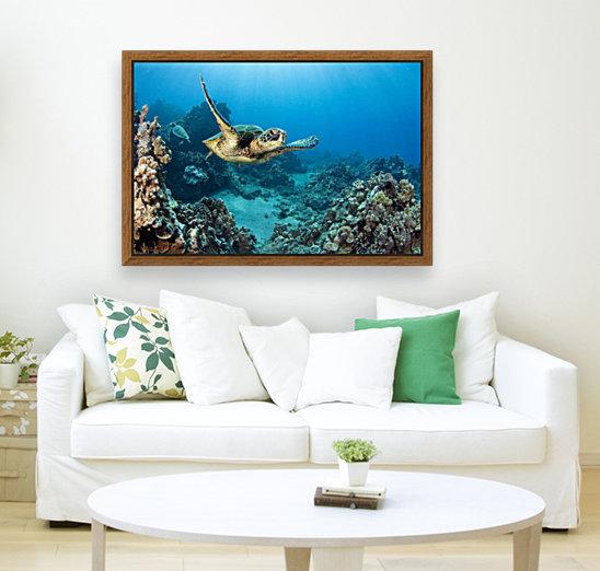 USA, Green Sea Turtle (Chelonia Mydas); Hawaii  Art