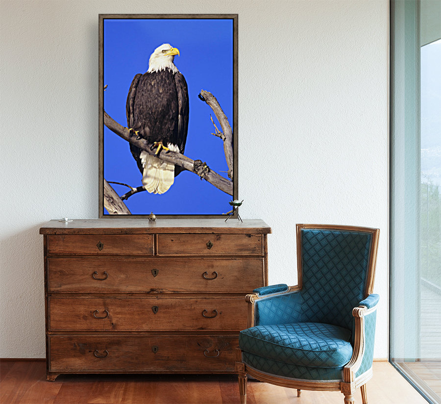 Alaska, Haines Bald Eagle Reserve, Bald Eagle (Haliaeetus Leucocephalus) Perched On A Branch.  Art