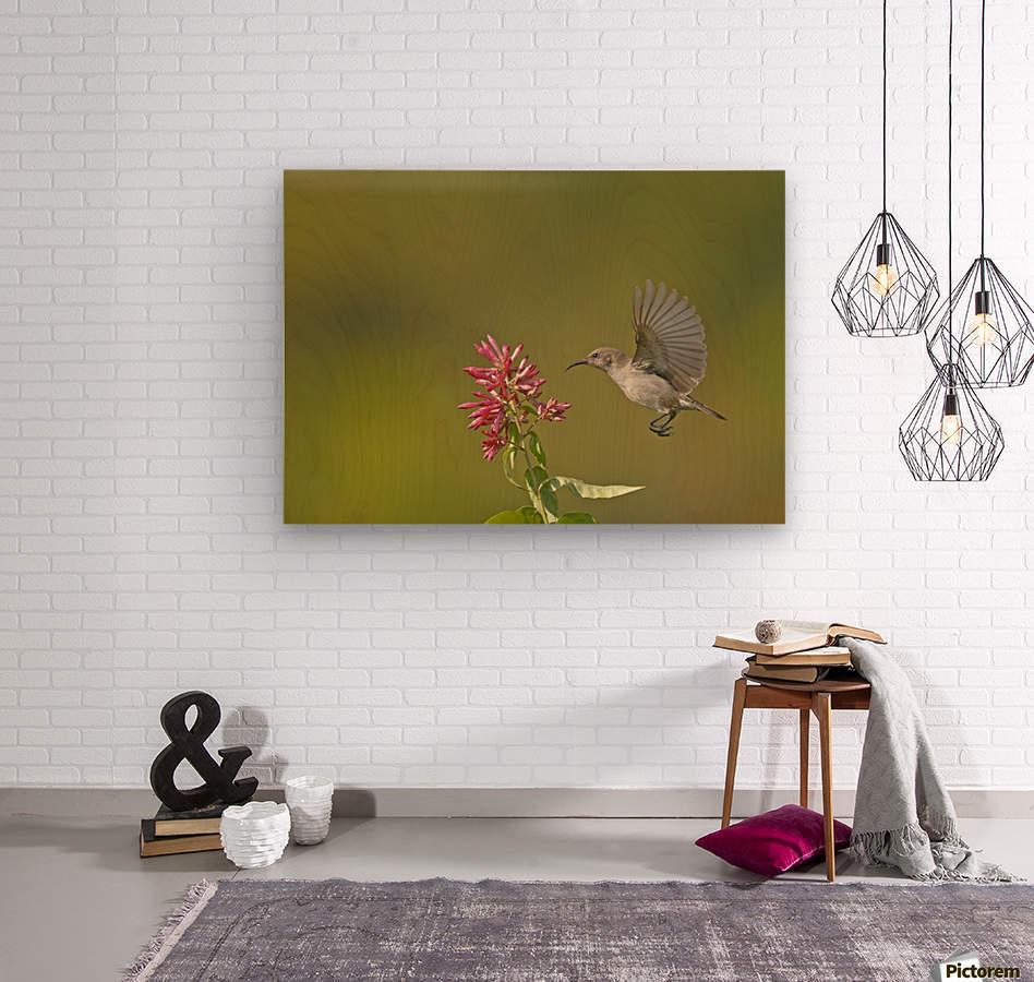 Sunbird  Wood print