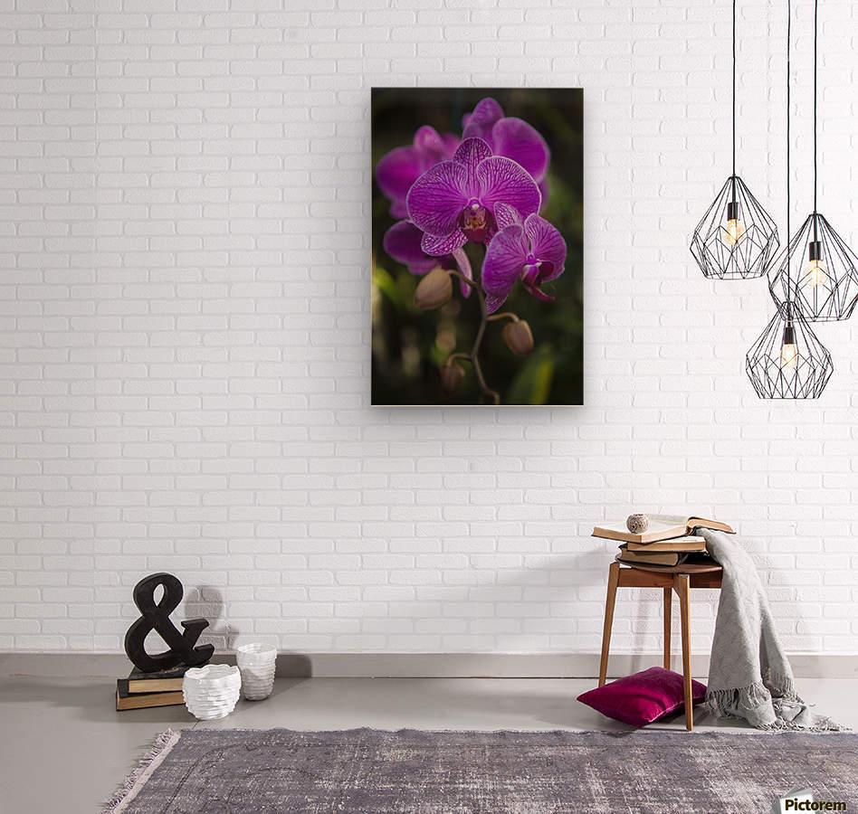 Phalaenopsis orchids in bloom; Kailua, Island of Hawaii, Hawaii, United States of America  Wood print