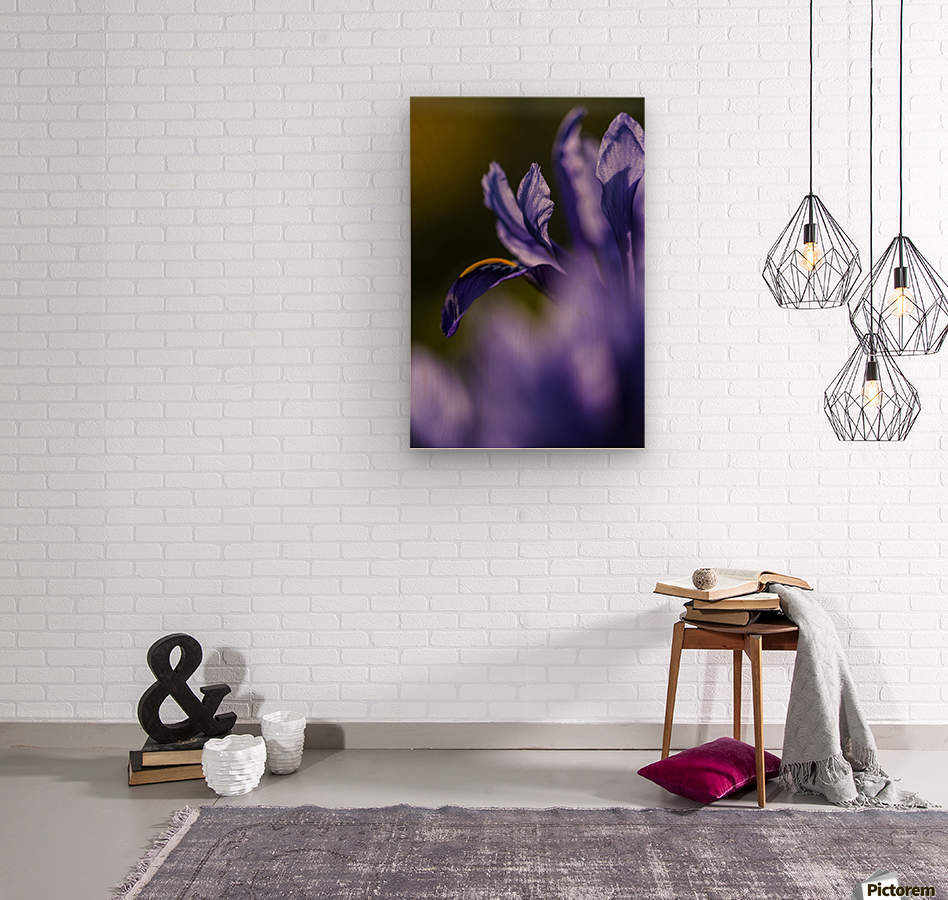 The dwarf Iris is one of the first flowers to bloom in the spring; Oregon, United States of America  Wood print