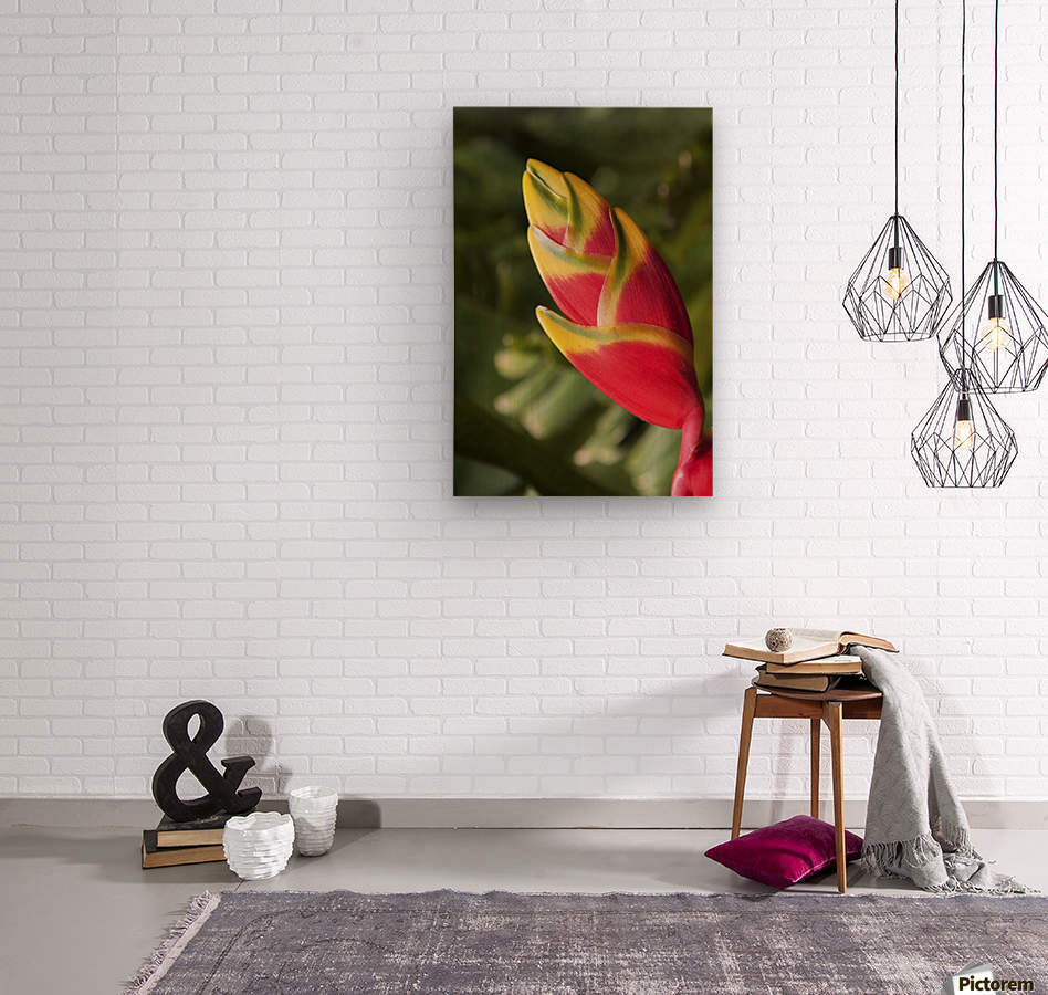 Close-up of lobster-claw heliconia flower; Maui, Hawaii, United States of America  Wood print