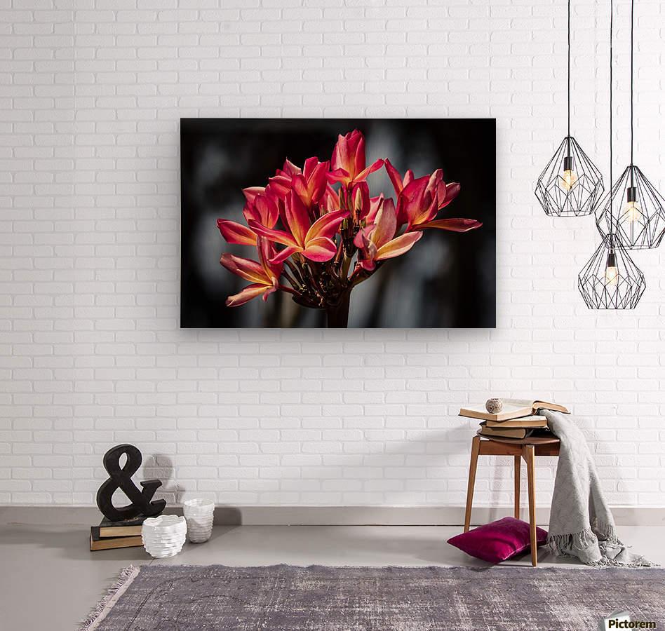 Close-up of bright pink plumeria flowers; Maui, Hawaii, United States of America  Wood print