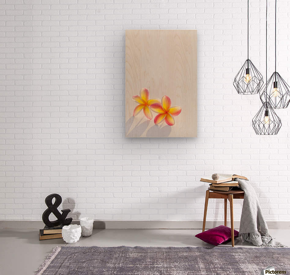 A pair of beautiful yellow and pink Plumeria flowers together (Apocynaceae) on a white background; Honolulu, Oahu, Hawaii, United States of America  Wood print