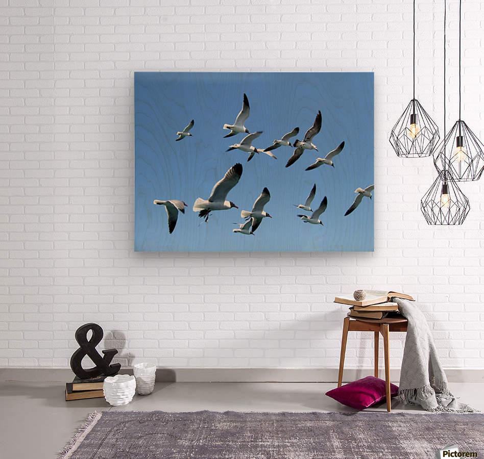 Seagulls against a clear blue sky  Wood print