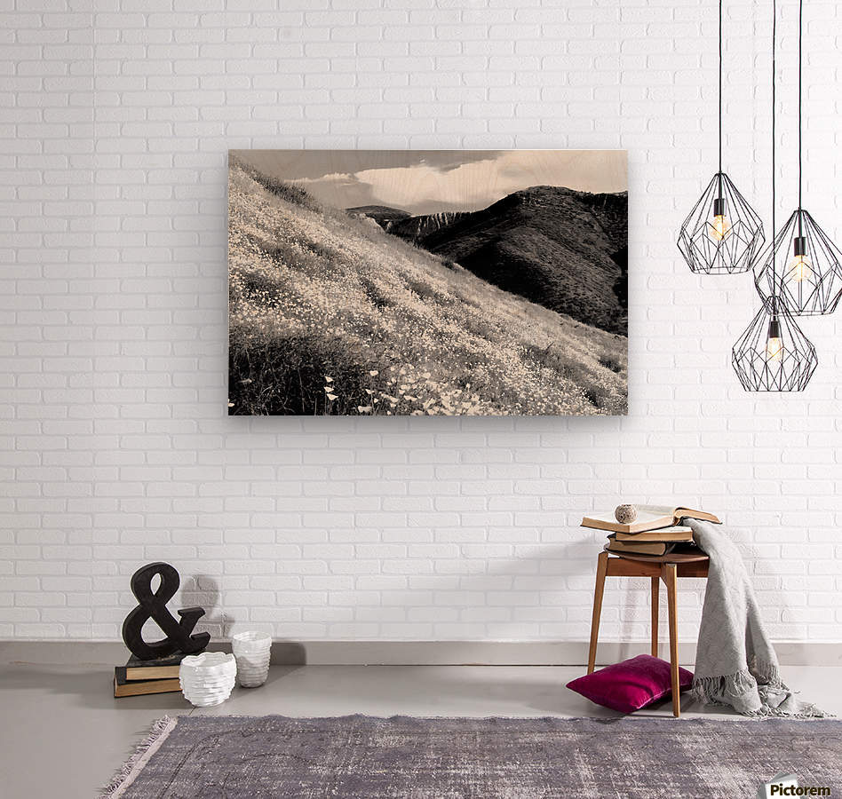 poppy flower field with mountain and cloudy sky background in black and white  Wood print