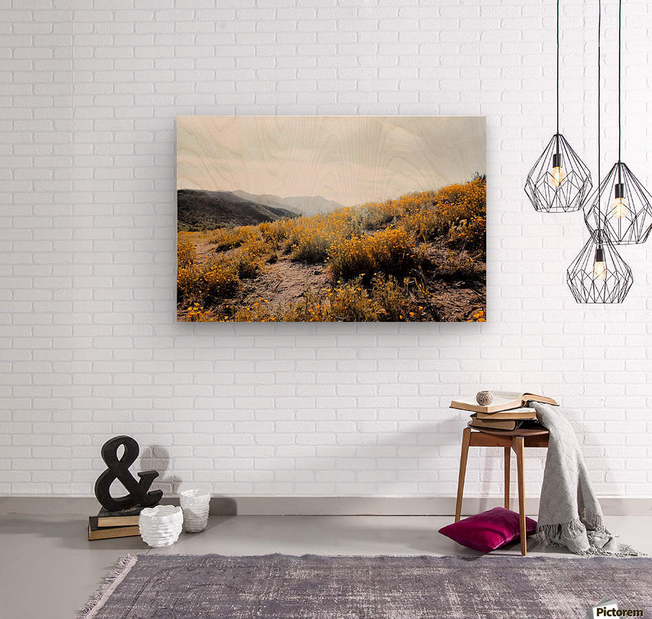 vintage style yellow poppy flower field with summer sunlight  Wood print