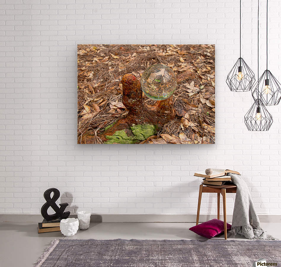 HDR CRYSTAL BALL IN A CYPREE KNEE FORK  Wood print