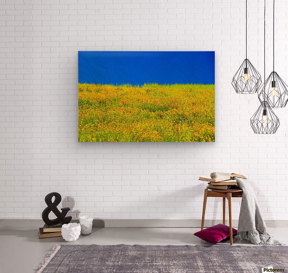 yellow poppy flower field with green leaf and clear blue sky ...