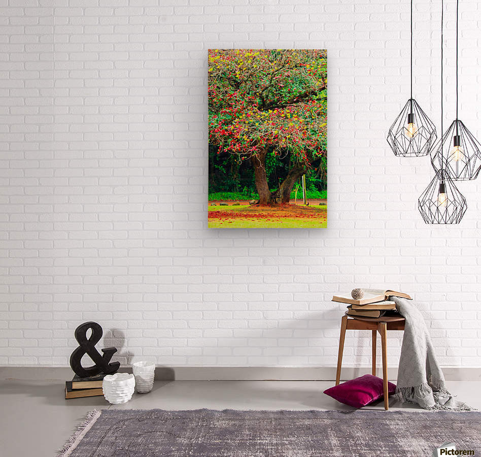 big tree with green yellow and red leaves  Wood print